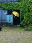 Rainy Day at La Bonne Etoile, Kippy at the Studio Entrance